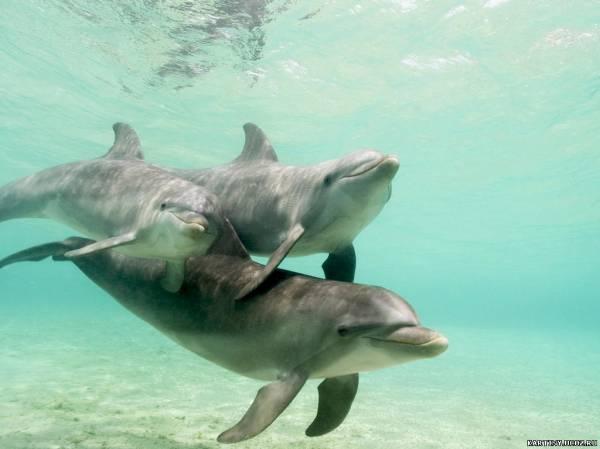 Подводный мир картинки дельфины border 0 a