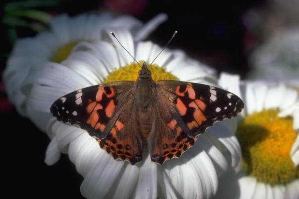 Alt картинки насекомые картинки