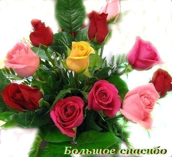 http://kartiny.ucoz.ru/_ph/159/2/289796755.jpg