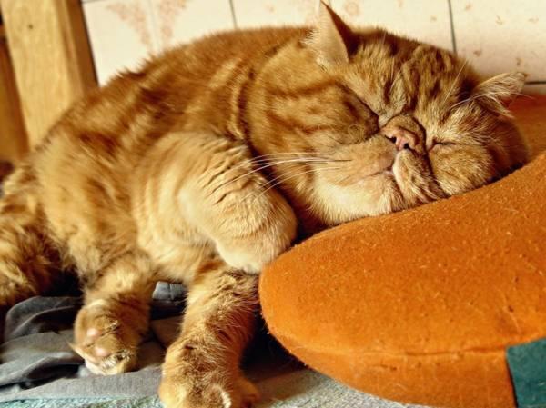 Кошки картинки кошки картинки кошки
